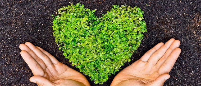 Green Heart from Plants